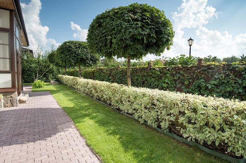 Благоустройство территорий: озеленение, живая изгородь