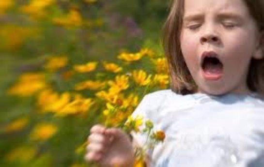 Поллиноз и основные причины пыльцевой аллергии