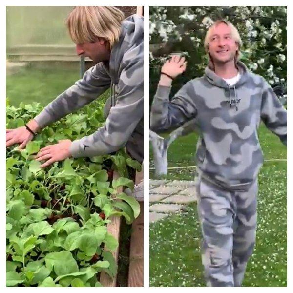 «Редиска на грядках заколосилась» - Плющенко и Рудковская похвастались своим огородом