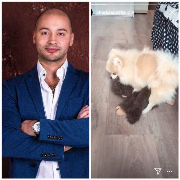 Развратная собачка Андрея Черкасова возмутила пользователей сети