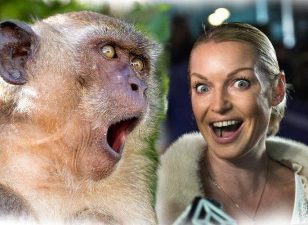 «Реверансы» перед обезьяной? Волочкова дошла до абсурда в попытке скрыть своё лицо