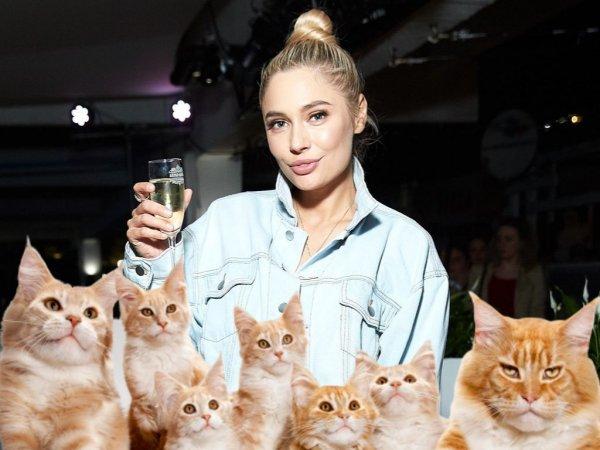 Будущее - 19 кошек. Рудова неумело посмеялась над своим одиночеством
