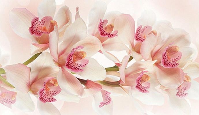 Живі квіти у нашому житті
