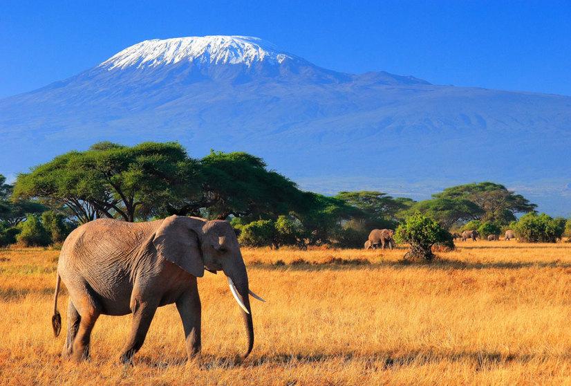Незабываемое путешествие в Кению